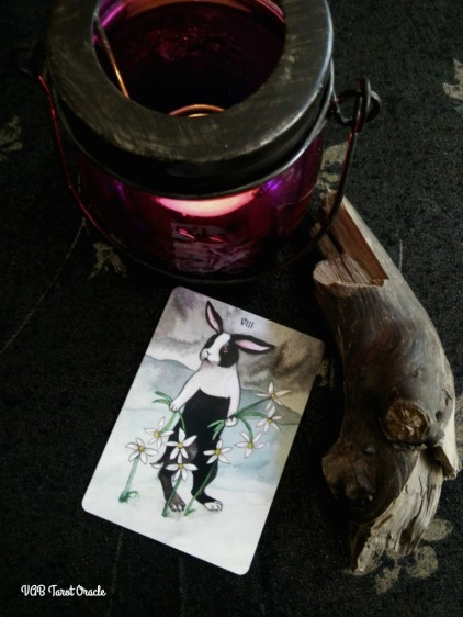 Rabbit Tarot - VIIIof Daisies-Earth-Pentacles 06-29-2017PICM