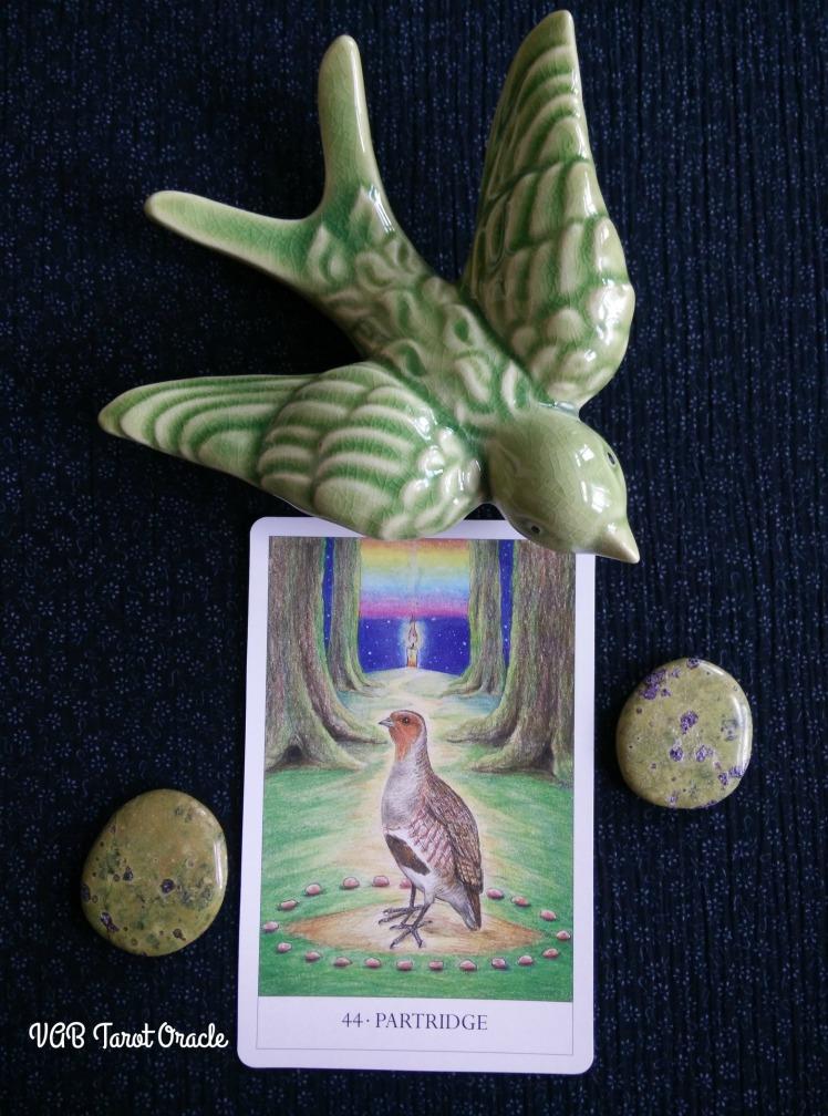 2017-08-21 Bird Cards (1) PICM