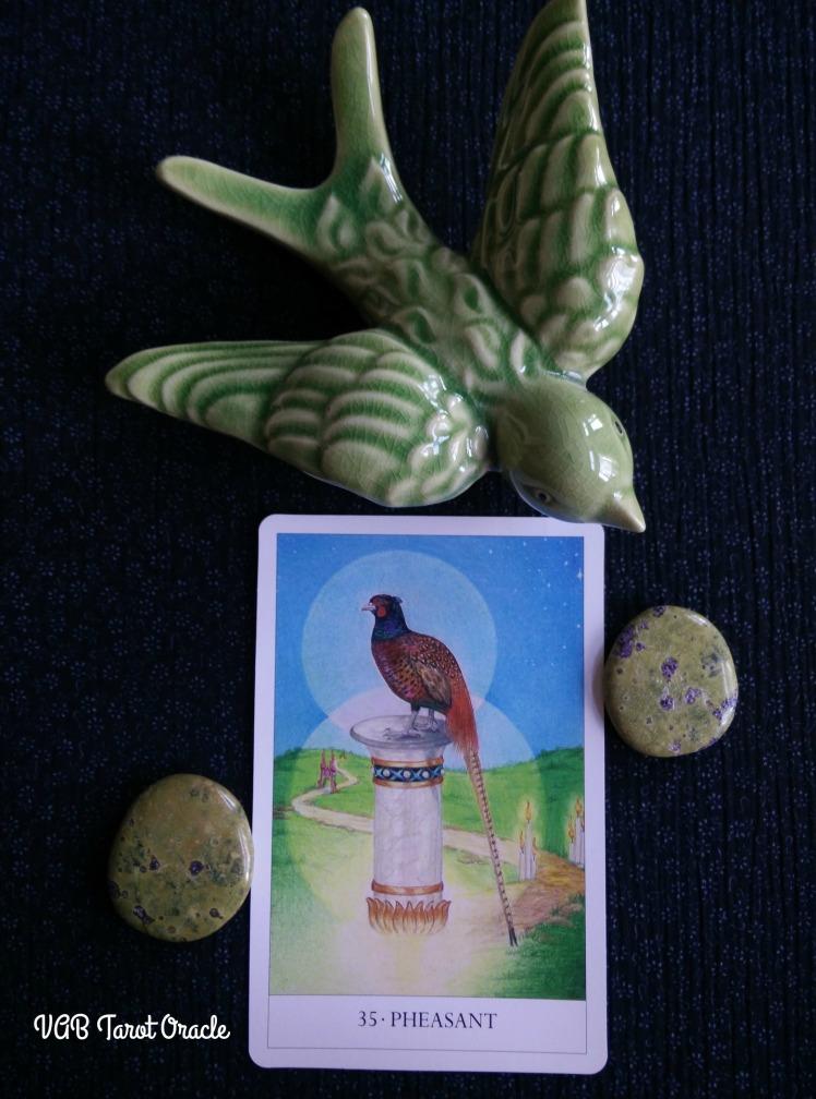2017-08-21 Bird Cards (5) PICM
