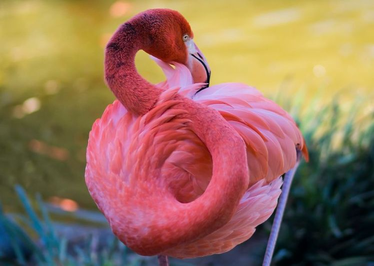 Pink Flamingo August 23, 2017